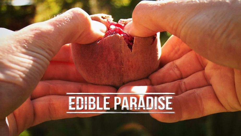 Edible Paradise graphic